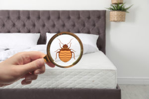 How to Recognize Bed Bugs