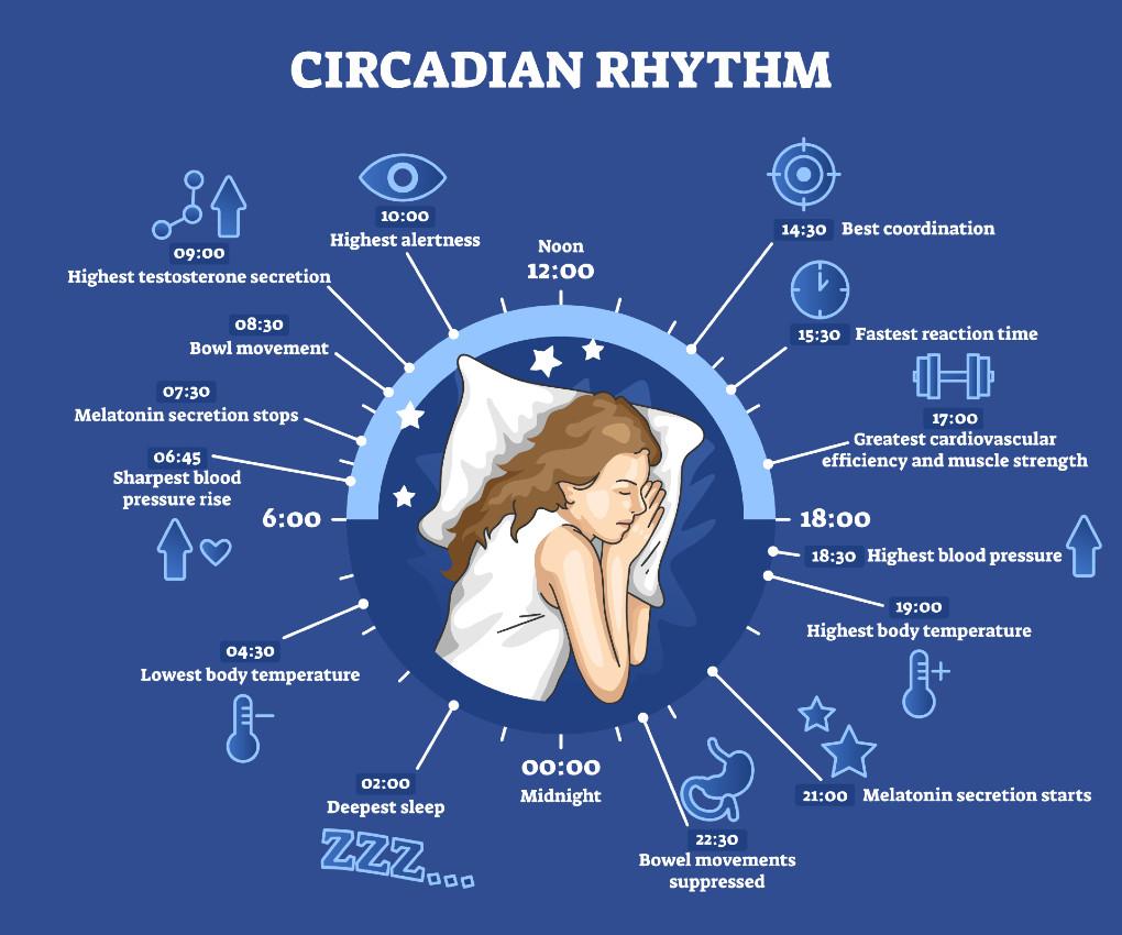 maintain a good circadian rhythm